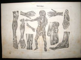 Anatomy Print: 1835 Arteries, Folio.
